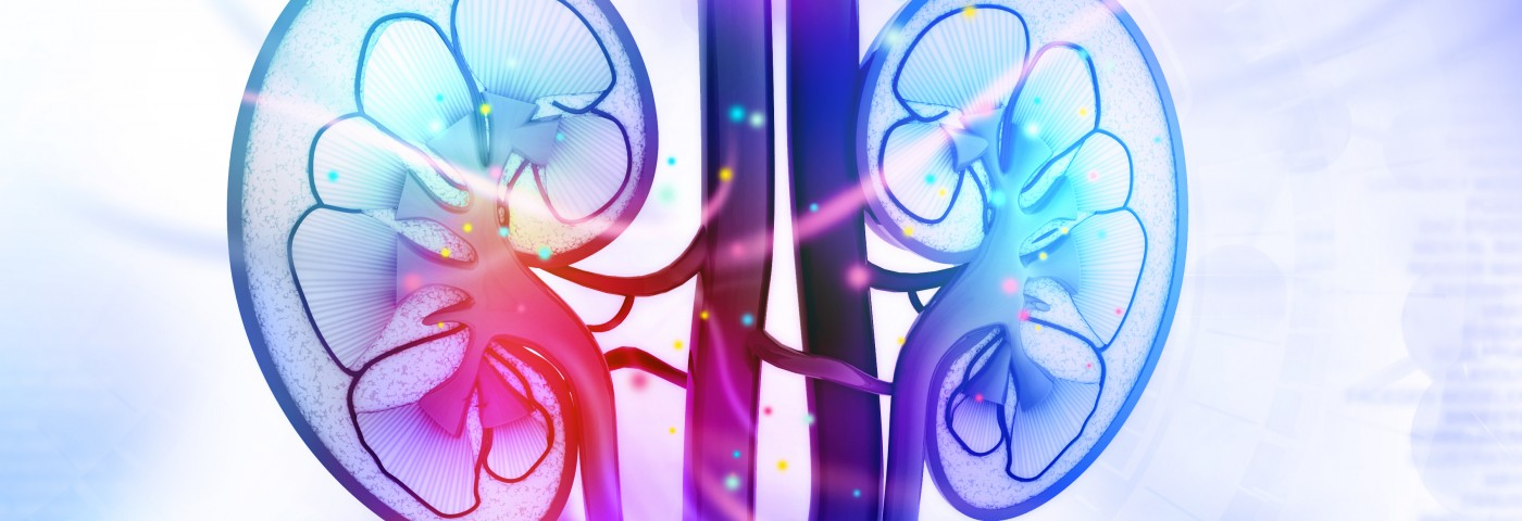 Diabetic Kidney Damage Reversed in Mice on Low-dose Cytokine Treatment