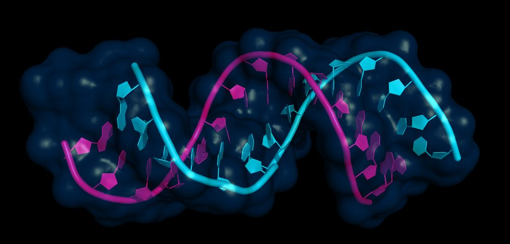 Alterations to Epigenome May Lead to Diabetes in Obese People, Researchers Say